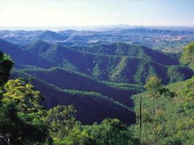 Kroombit Tops National Park - Accommodation Cooktown