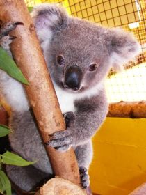 Cooberrie Park Wildlife Sanctuary - Accommodation Cooktown
