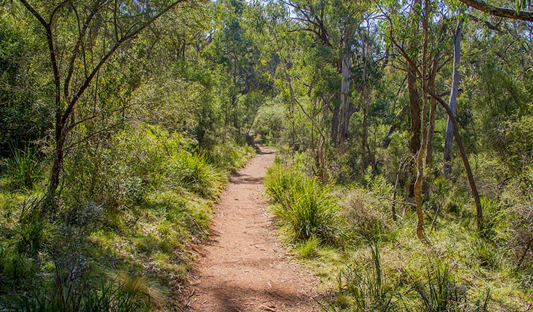 Mares Forest Creek walking track - Accommodation Cooktown