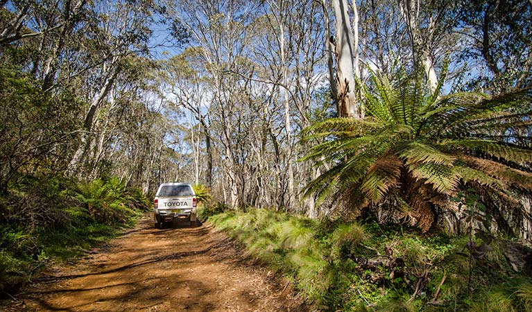 Barrington trail - Accommodation Cooktown