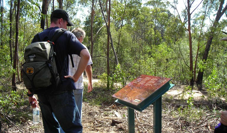 Finchley cultural walk - Accommodation Cooktown
