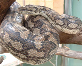 Armadale Reptile Centre - Accommodation Cooktown