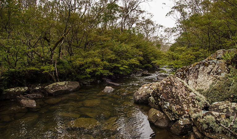River walking track - Accommodation Cooktown