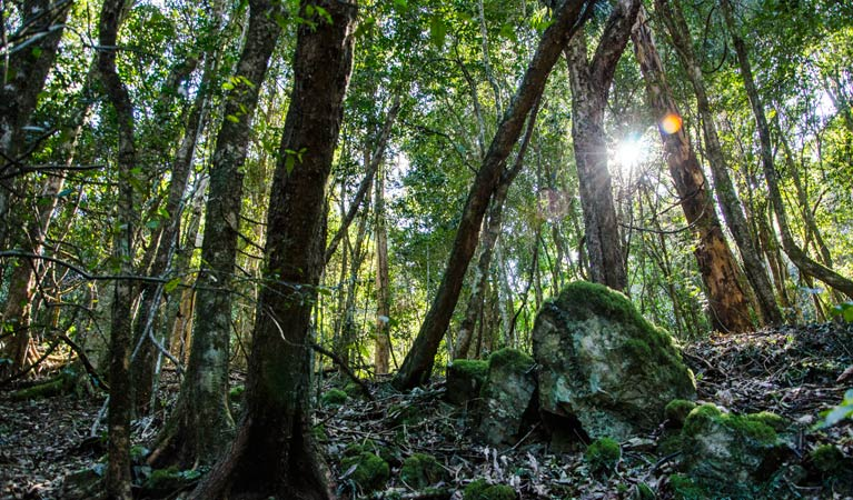 Copeland Tops State Conservation Area - Accommodation Cooktown