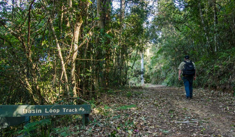 Basin Loop track - Accommodation Cooktown