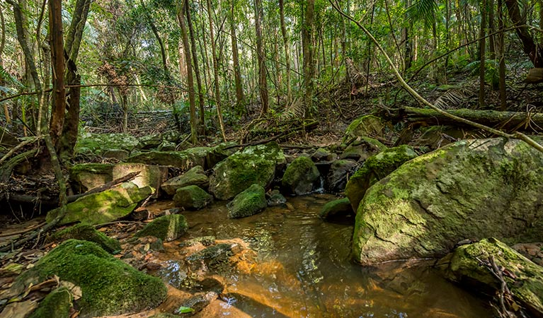 Palm Grove Nature Reserve - Accommodation Cooktown