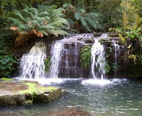 Barrington Tops National Park Walks - Accommodation Cooktown