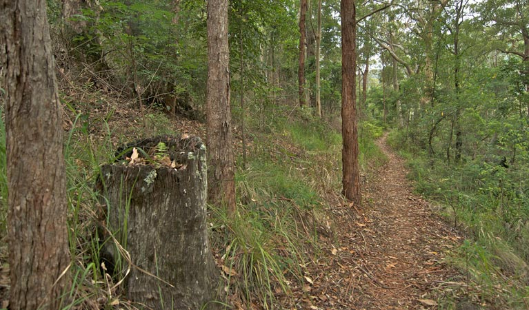 Border loop walk - Accommodation Cooktown