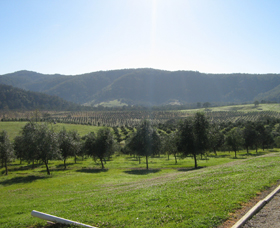 Hastings Valley Olives - Accommodation Cooktown