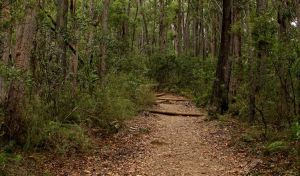 Pigeon House Mountain Didthul walking track - Accommodation Cooktown