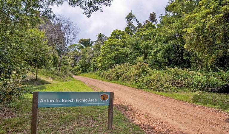 Antarctic Beech picnic area - Accommodation Cooktown