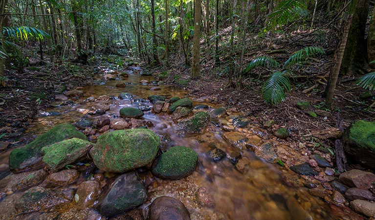 Starrs Creek picnic area - Accommodation Cooktown