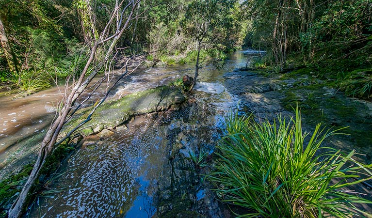 Dawson River walking track - Accommodation Cooktown