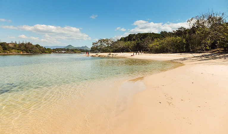 Brunswick Heads Nature Reserve - Accommodation Cooktown