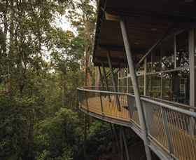 Tarkine Forest Adventures - Dismal Swamp - Accommodation Cooktown
