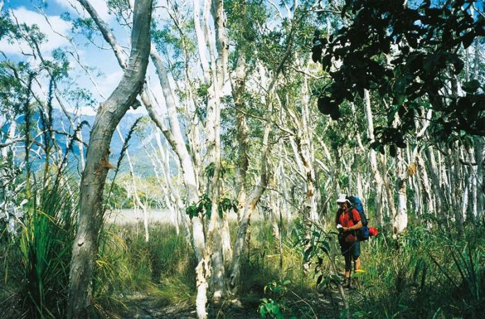 Thorsborne Trail Hinchinbrook Island National Park - Accommodation Cooktown