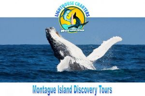 Lighthouse Charters Narooma - Accommodation Cooktown