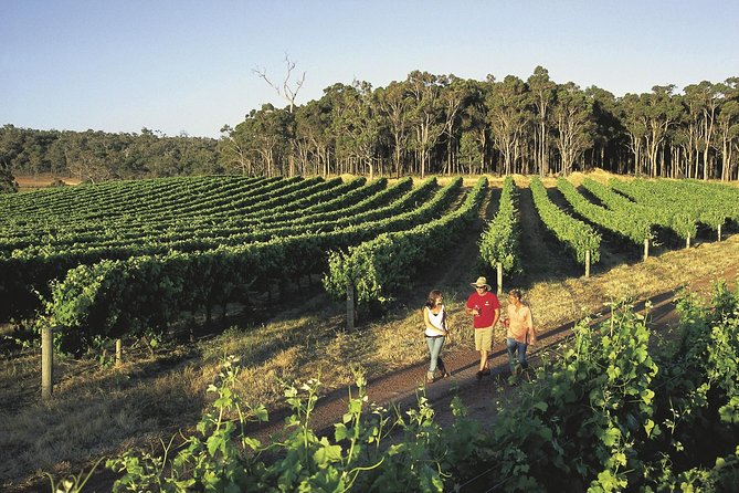 Margaret River Caves Wine and Cape Leeuwin Lighthouse Tour from Perth - Accommodation Cooktown