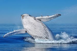 Whale Watching Dunsborough - Accommodation Cooktown