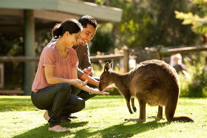 Very Best of Perth Tour - Wildlife Park  City Highlights Tour - Accommodation Cooktown