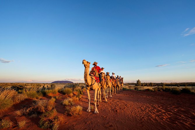 Uluru Camel Express Sunrise or Sunset Tours - Accommodation Cooktown