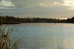Lake Inverell Reserve - Accommodation Cooktown