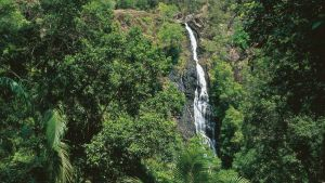 Mapleton - Accommodation Cooktown