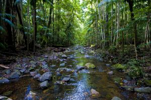 Nambucca Valley - Accommodation Cooktown