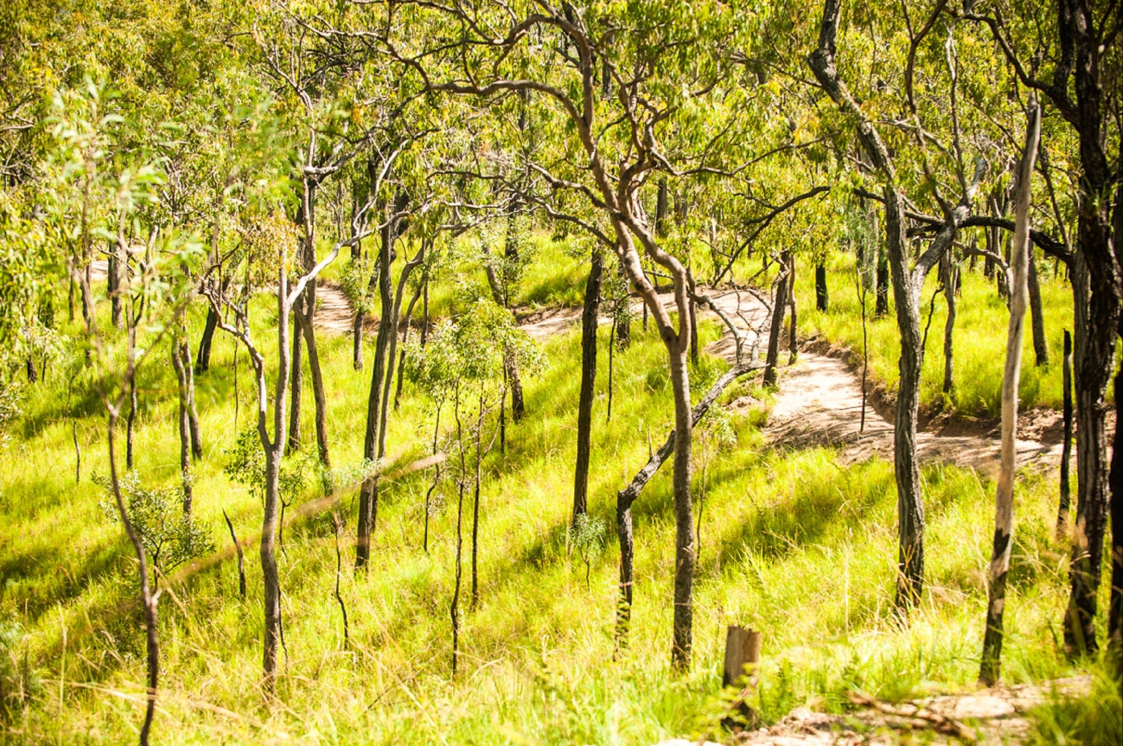 Davies Creek Mountain Bike Park - Accommodation Cooktown