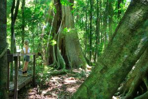 Mary Cairncross Scenic Reserve - Accommodation Cooktown