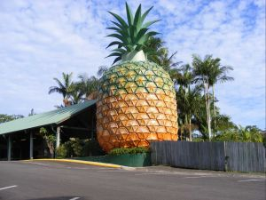 Woombye - Accommodation Cooktown