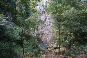 Kondalilla Falls Circuit Kondalilla National Park - Accommodation Cooktown