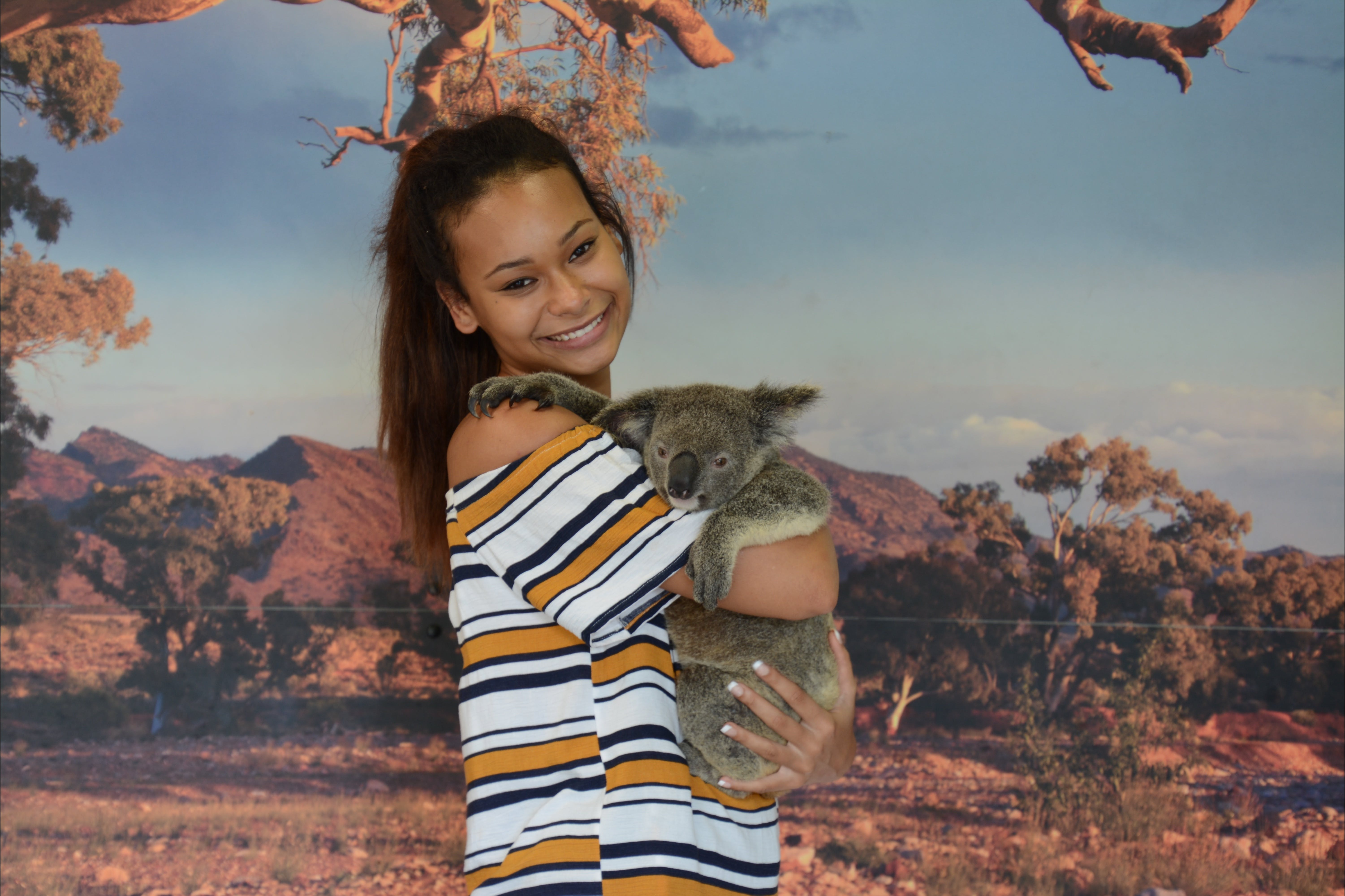 Kuranda Koala Gardens - Accommodation Cooktown