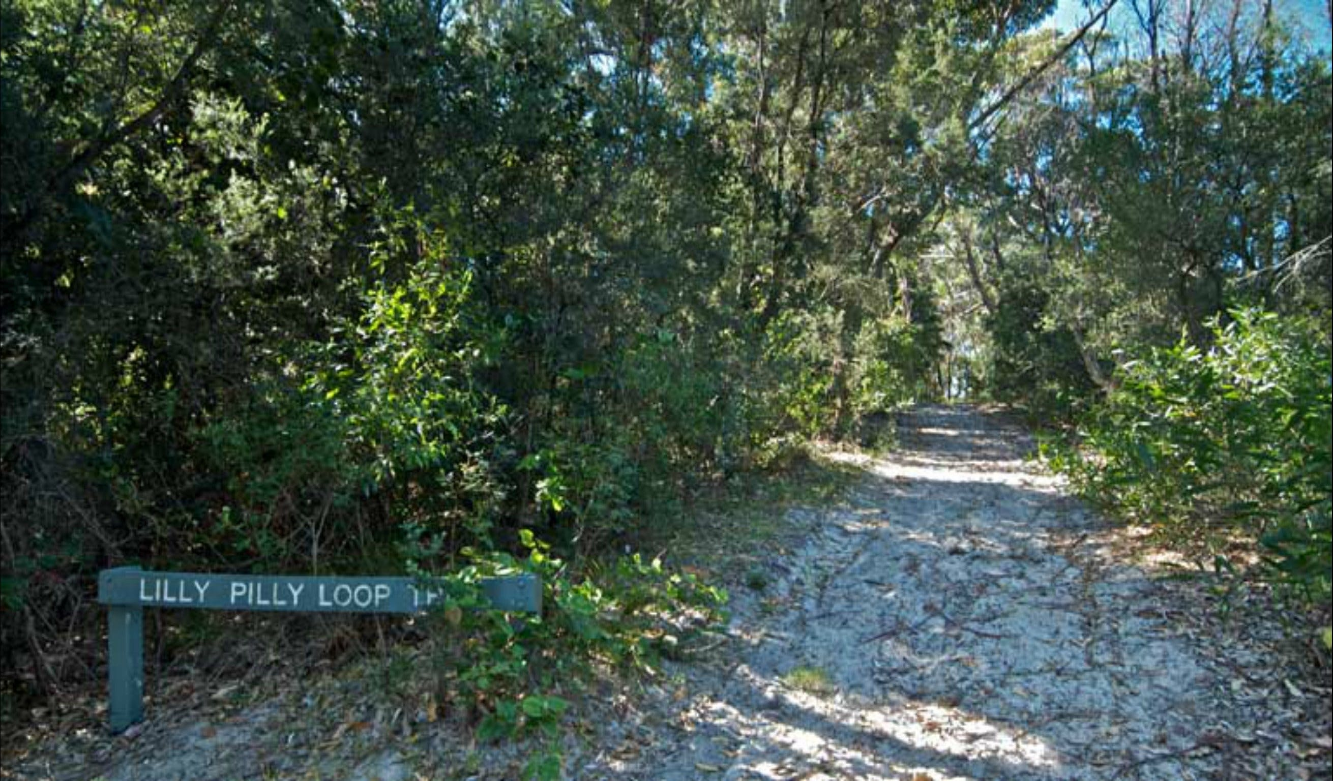 Lillypilly loop trail - Accommodation Cooktown