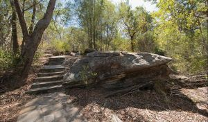 Mooney Mooney nature walk - Accommodation Cooktown