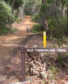 Old Timberline and Sidings Rail Trails - Accommodation Cooktown