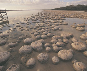 Lake Clifton Thrombolites - Accommodation Cooktown