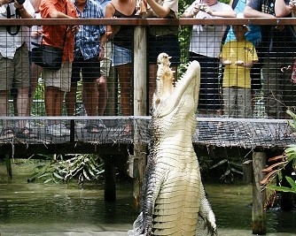Hartley's Crocodile Adventures - Accommodation Cooktown