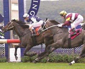 Gosford Race Club - Accommodation Cooktown