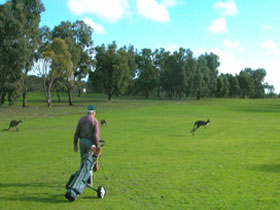 Coffin Bay Golf Club - Accommodation Cooktown