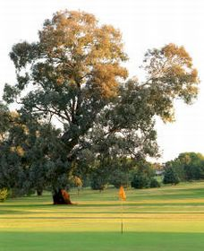 Cowra Golf Club - Accommodation Cooktown