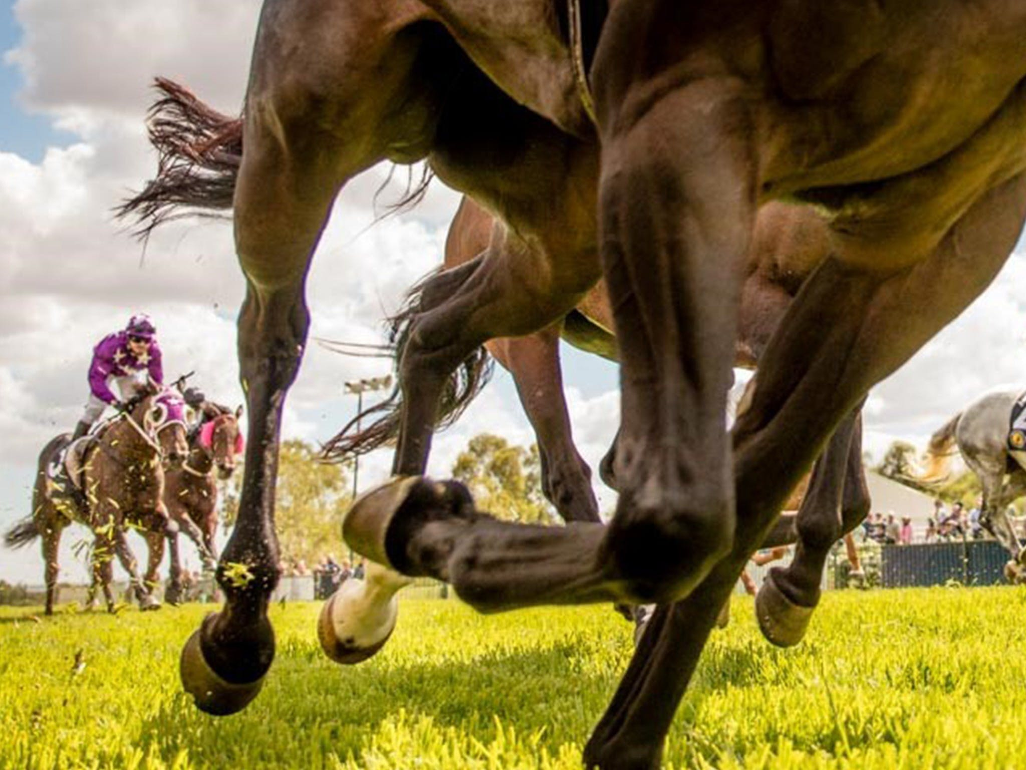 Night Markets and Race Day - Accommodation Cooktown