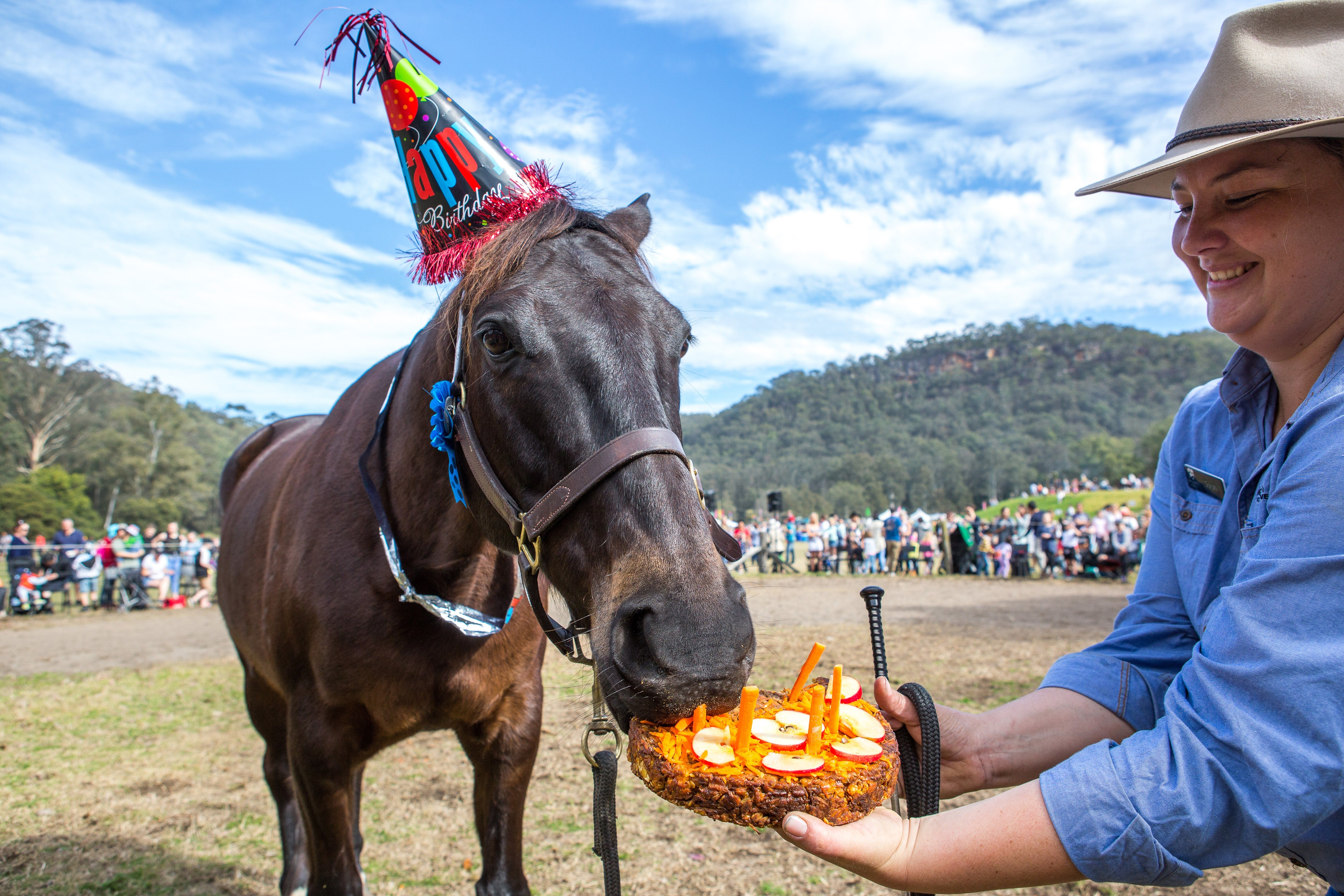 Horses Birthday Festival - Accommodation Cooktown