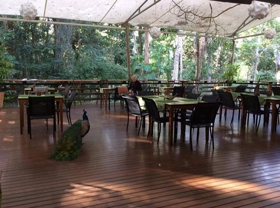 The Restaurant at Cedar Park - Accommodation Cooktown