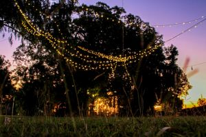 Banyan Tree - Accommodation Cooktown