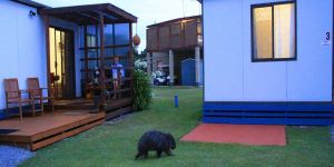 BIG4 Kelso Sands Holiday  Native Wildlife Park - Accommodation Cooktown